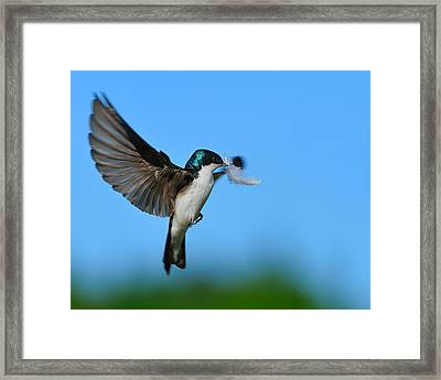 Light As A Feather Framed Print by Tony Beck