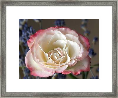 Light As Air Framed Print by Kathy Bucari