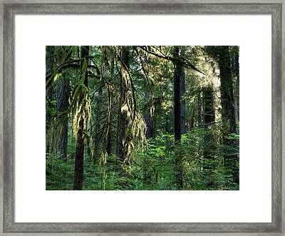 Lighting The Forest Framed Print by Leland D Howard