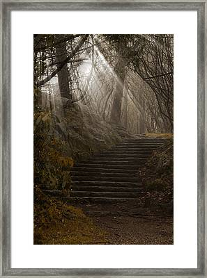 Lighting The Path Framed Print by Andrew Soundarajan