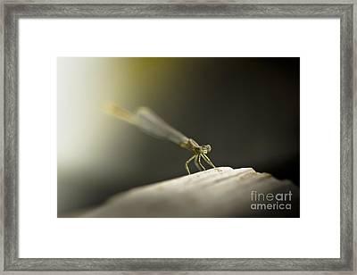 Like An Angel Framed Print by Kim Henderson