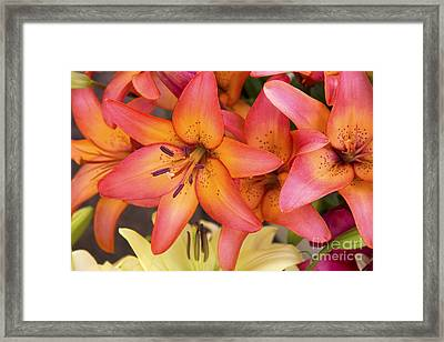 Lilies Background Framed Print by Jane Rix