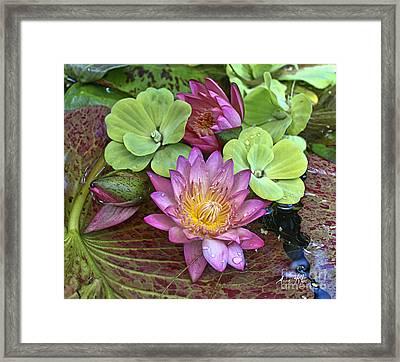 Lilies No. 21 Framed Print by Anne Klar