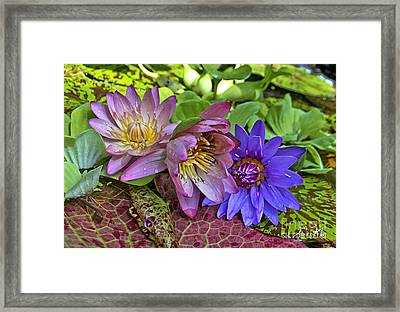 Lilies No. 29 Framed Print by Anne Klar
