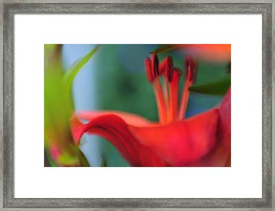 Lilies1 Framed Print by Peter Millar