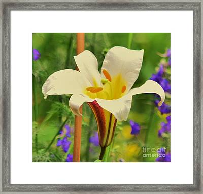 Lilly Framed Print by Artie Wallace