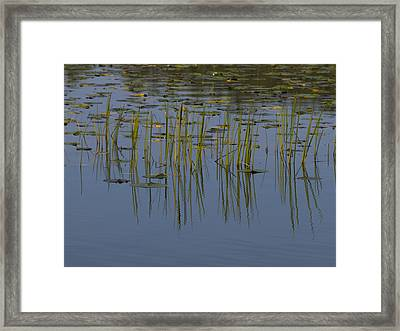 Lilly Pads Float On A River Framed Print by Stacy Gold
