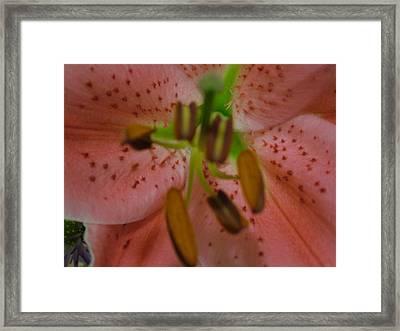 Lily Framed Print by Kim Jacobi