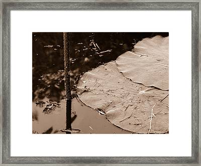 Lily Pad Framed Print by Nawarat Namphon