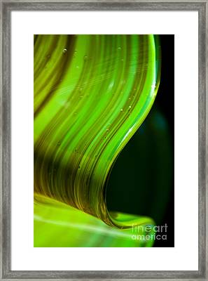 Lime Curl Framed Print by Dana Kern