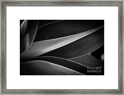 Lines Of Life Framed Print by Melle Varoy