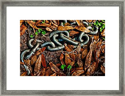 Links And Leaves Framed Print by Christopher Holmes