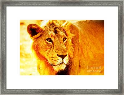 Lion Framed Print by Nilay Tailor