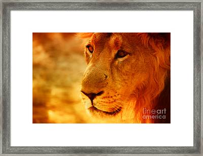 Lion The King Framed Print by Nilay Tailor