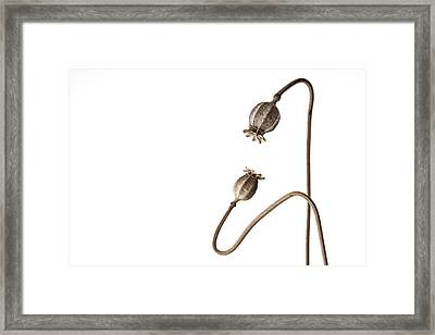Listening Number 2 Framed Print by Carol Leigh