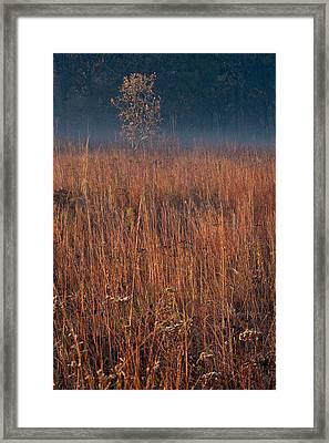 Little Bluestem Prairie Grass Framed Print by Steve Gadomski