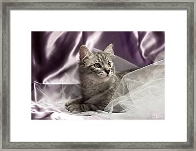 Little Cat On Lilac Framed Print by Raffaella Lunelli