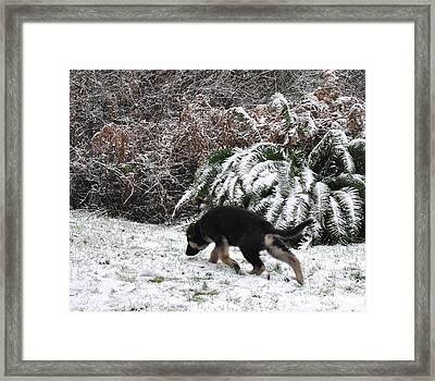 Little Explorer Framed Print by Tanya  Searcy