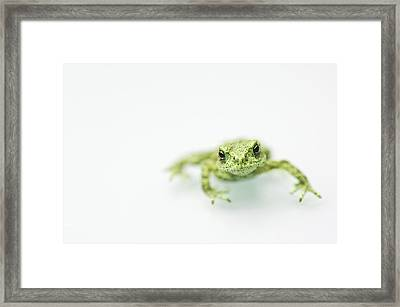 Little Frog Framed Print by Erik van Hannen