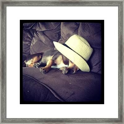 Little Guy Was So Tired He Fell Asleep Framed Print by Stephanie Brown
