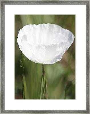 Little Hope Framed Print by  The Art Of Marilyn Ridoutt-Greene