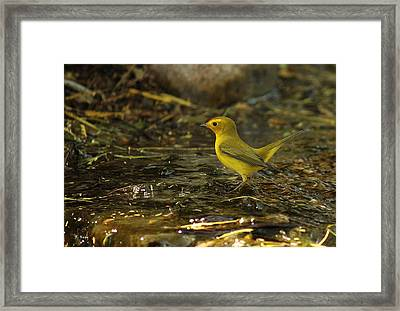 Little Miss Priss Framed Print by Roena King
