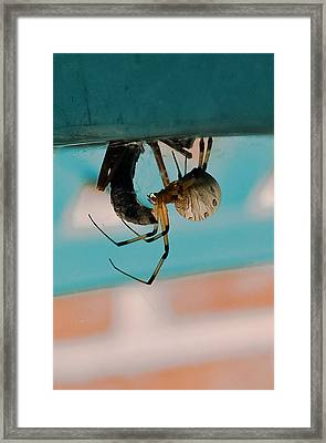 Little Miss Venom Framed Print by DigiArt Diaries by Vicky B Fuller