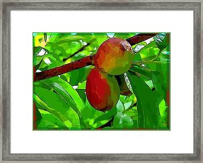Little Peaches Framed Print by Mindy Newman