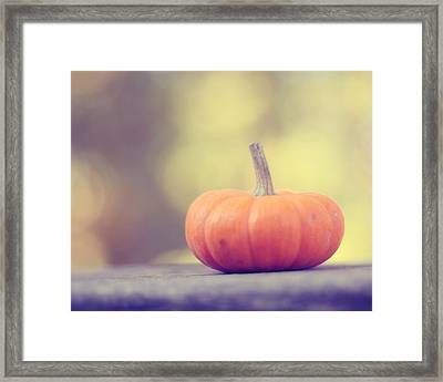 Little Pumpkin Framed Print by Amy Tyler