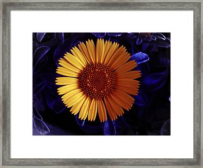 Little Yellow Flower Framed Print by Nafets Nuarb