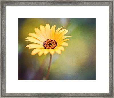 Living Life Boldly Framed Print by Joel Olives