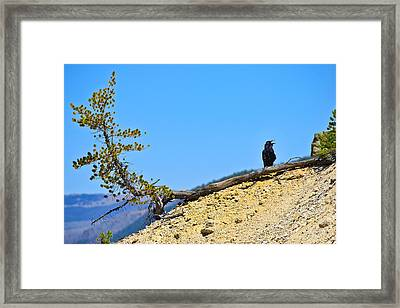 Living On The Edge Framed Print by Greg Norrell