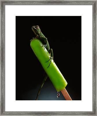 Lizard On Popsicle Framed Print by John Wong