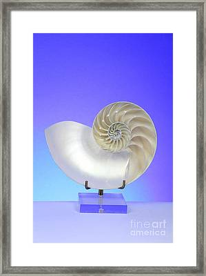 Logarithmic Spiral Framed Print by Photo Researchers, Inc.