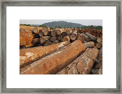 Logged Timber From The Tropical Framed Print by Cyril Ruoso