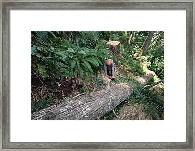 Loggers Clear Cutting Temperate Framed Print by Gerry Ellis