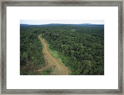 Logging Road In Lowland Tropical Framed Print by Gerry Ellis