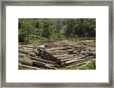Logs In Logging Area, Danum Valley Framed Print by Thomas Marent