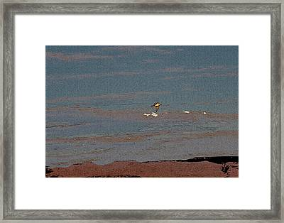 Lone Gull  Framed Print by Gilbert Artiaga