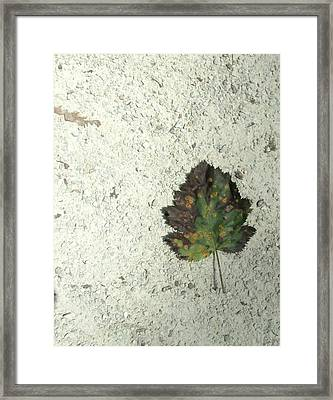 Lone Leaf Framed Print by Todd Sherlock