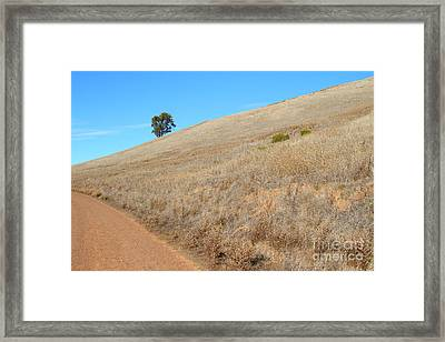 Lone Tree At End Of The Trail At Coyote Hills California . 7d10920 Framed Print by Wingsdomain Art and Photography