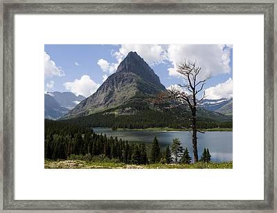 Lone Tree At Sinopah Mountain Framed Print by Lorraine Devon Wilke