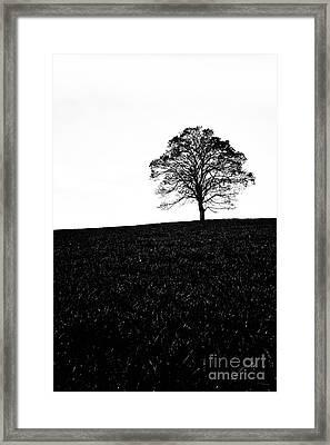 Lone Tree Black And White Silhouette Framed Print by John Farnan