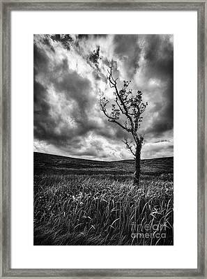 Lone Tree On The Ayrshire Moors Framed Print by John Farnan