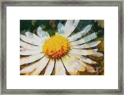Lonely Daisy Framed Print by Jutta Maria Pusl