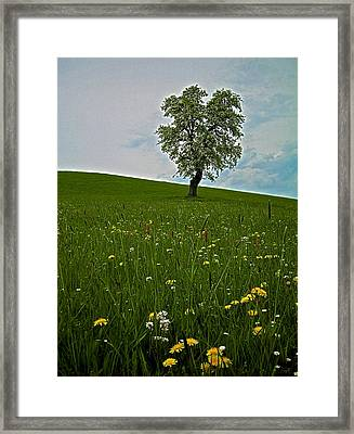 Lonely Tree ...  Framed Print by Juergen Weiss