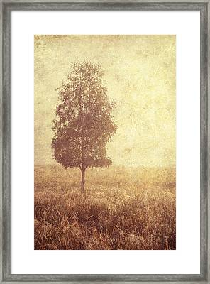 Lonely Tree. Trossachs National Park. Scotland Framed Print by Jenny Rainbow