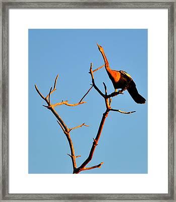 Long Framed Print by Barry R Jones Jr