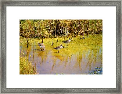 Long Billed Dowitchers Migrating Framed Print by Roena King