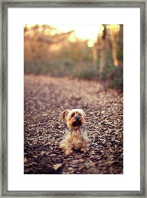 Long Hair Puppy Framed Print by Someone bought my images.